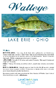 Lake Erie Walleye Note Card